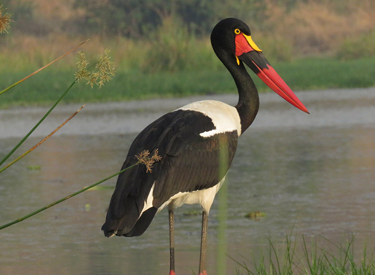 Bird Watching Tours Kenya