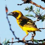 Birding in Uganda | Birdwatching Importance | Bird Watching Birds