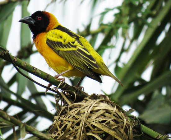 Kenya Bird Watching Tour